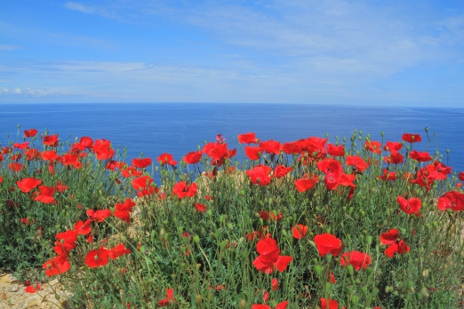Agean sea and red poppy - Ikaria Island - Greece - May 2011