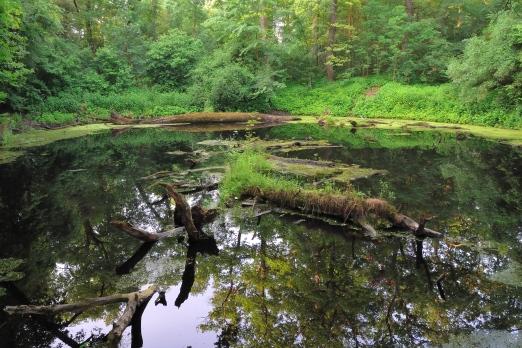 Impression of the nature reserve Kuehkopf Knoblauchsaue - Germany - June 2012