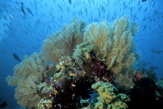 Underwater scenery - Raja Ampat Archipelago - West Papua 2008