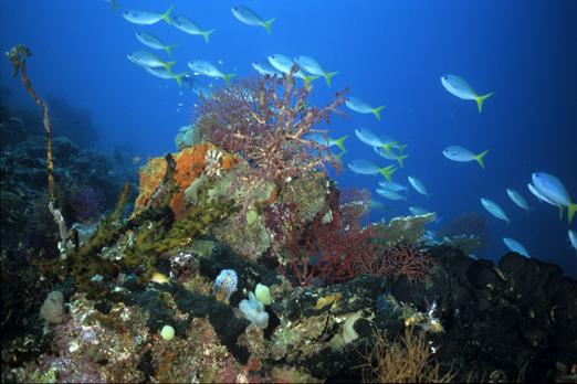 Underwater scenery - Raja Ampat Archipelago - West Papua - Indonesia 2008