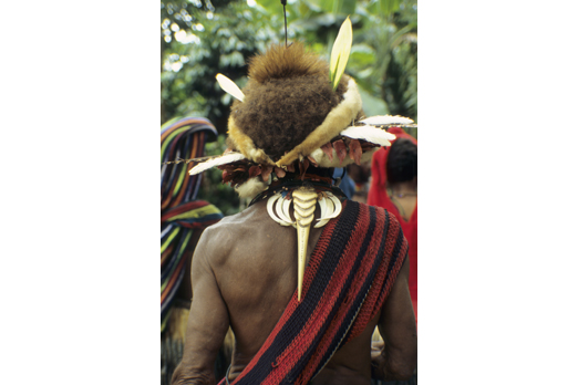 Detail from the back - native of the Huli tribe - Southern Highlands Province - PNG 2006