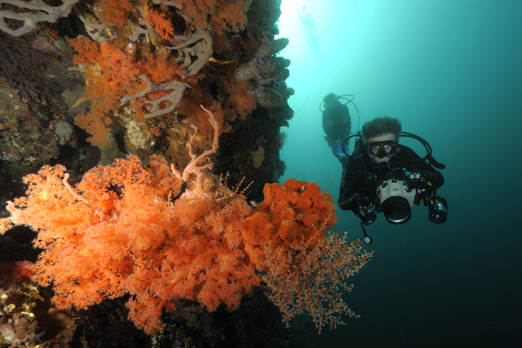 Richard and Susan exploring a coral reef - Pantar - Alor-Archipelago - Indonesia 2010