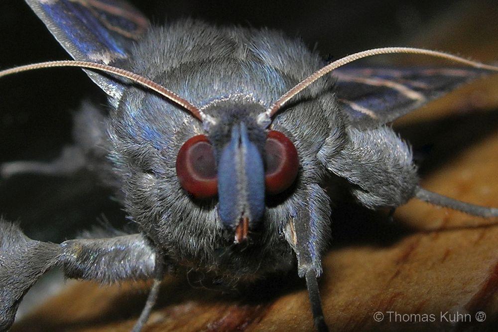 PNG_2006_Moth_Dscn1432