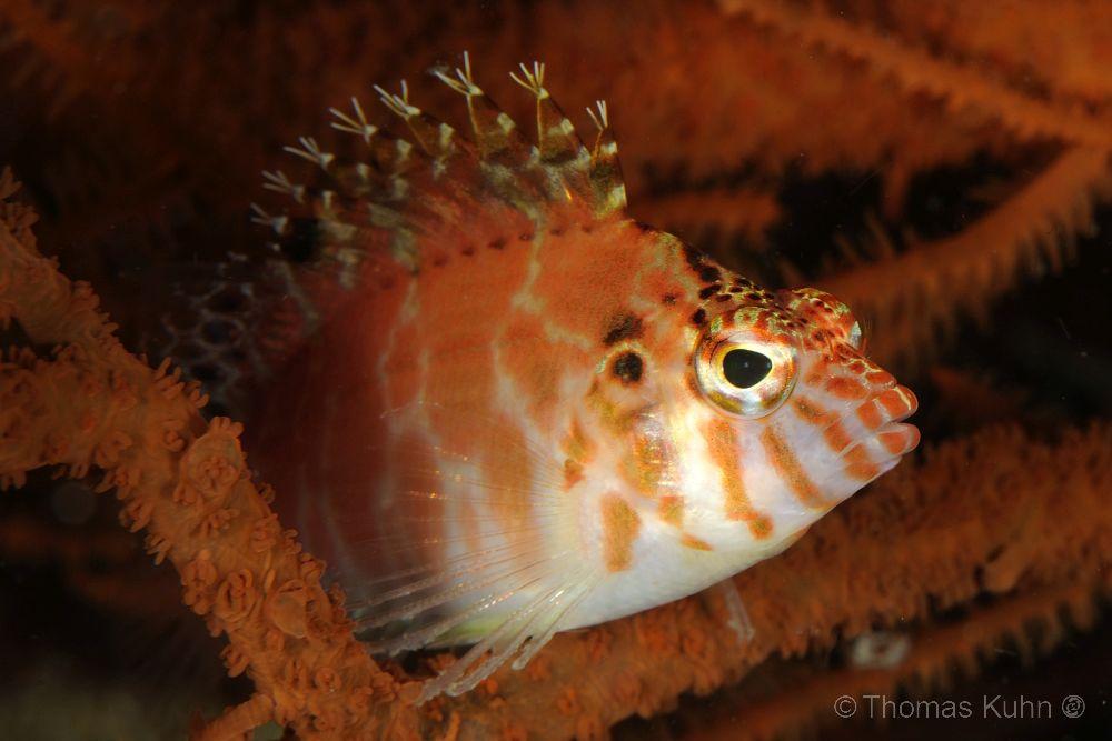 Triton_Bay_Divers_2015_10_11_TOM5128