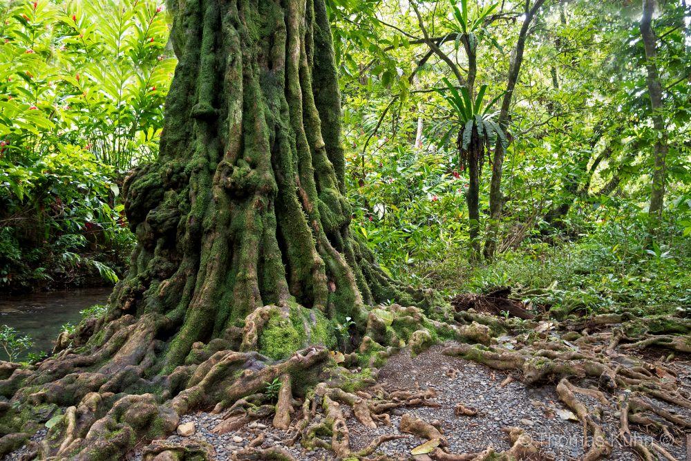 Niue_2019_DSCN1078