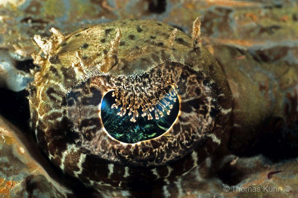PNG_2006_TOM_Crocodile_fish