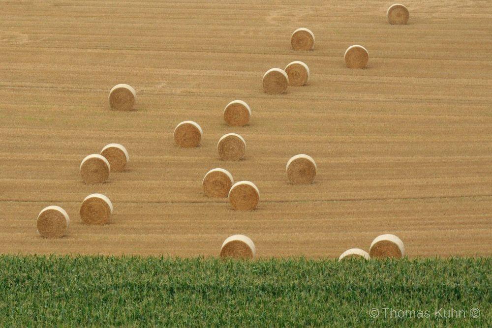 LandscapeCADUCEUS_03_08_2014_Ausflug_Diana_Suderburg_Turm_TOM_DSCN1684