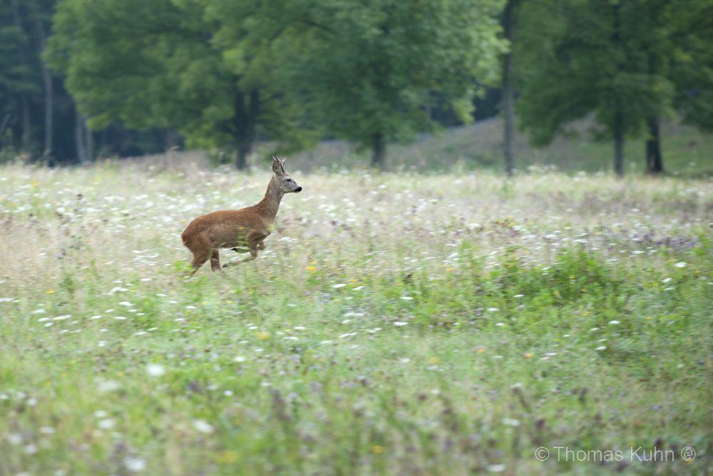 LandscapeGlauberg_2009_TOM0045