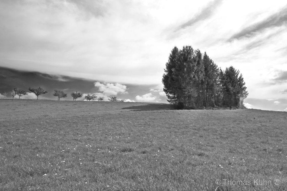 LandscapeGroß_Bieberau_Hundertmorgen_April_2014_sw1_TOMDSCN0150