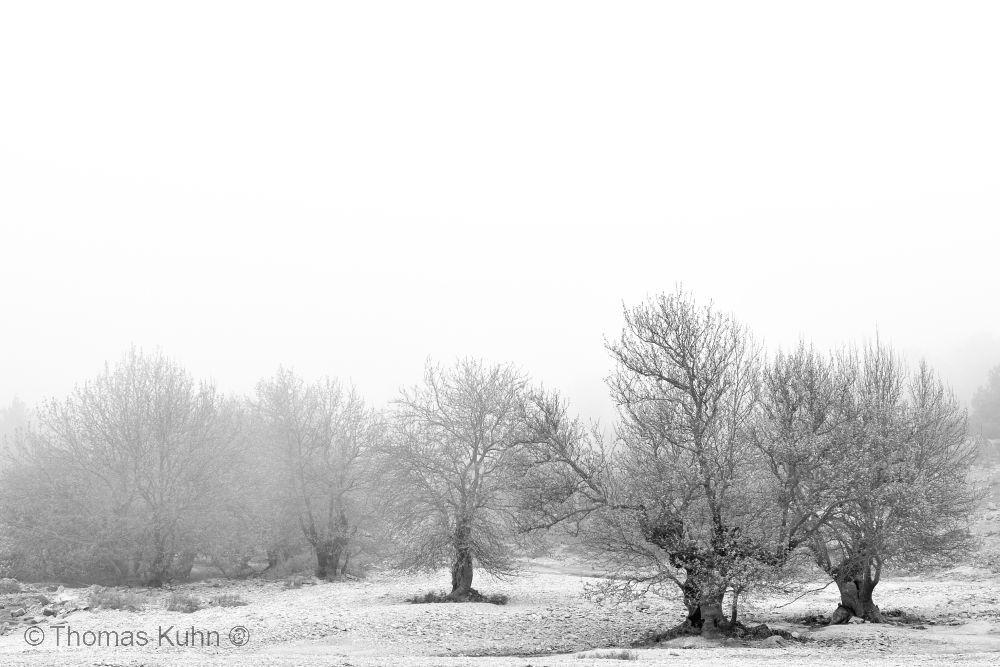 LandscapeIkaria_3_TOM9821