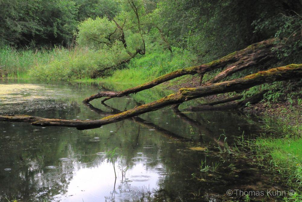 LandscapeKühkopf_DSCN3682
