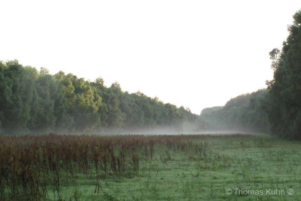 LandscapeKühkopf_IMG_4398