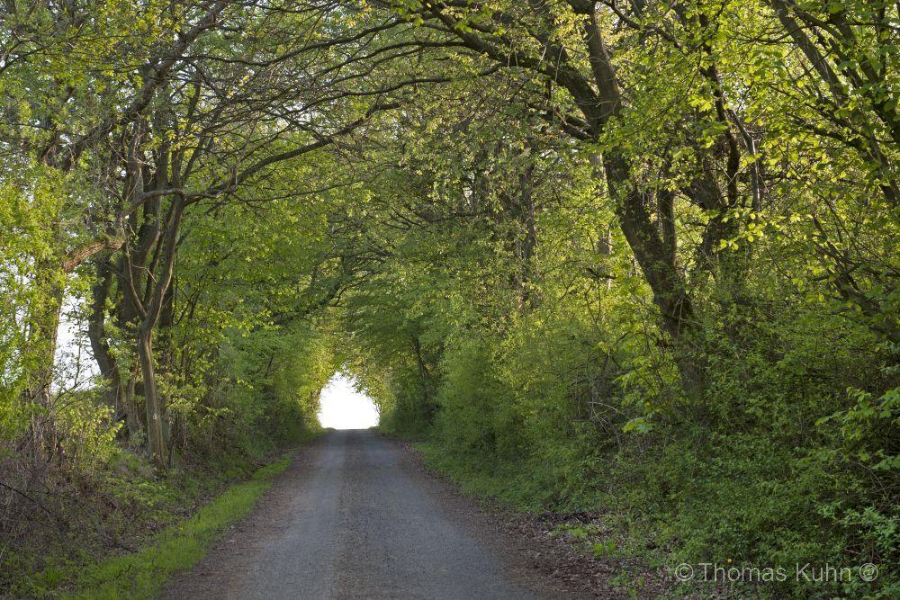 LandscapeOtzberg_05_2010_TOM3878