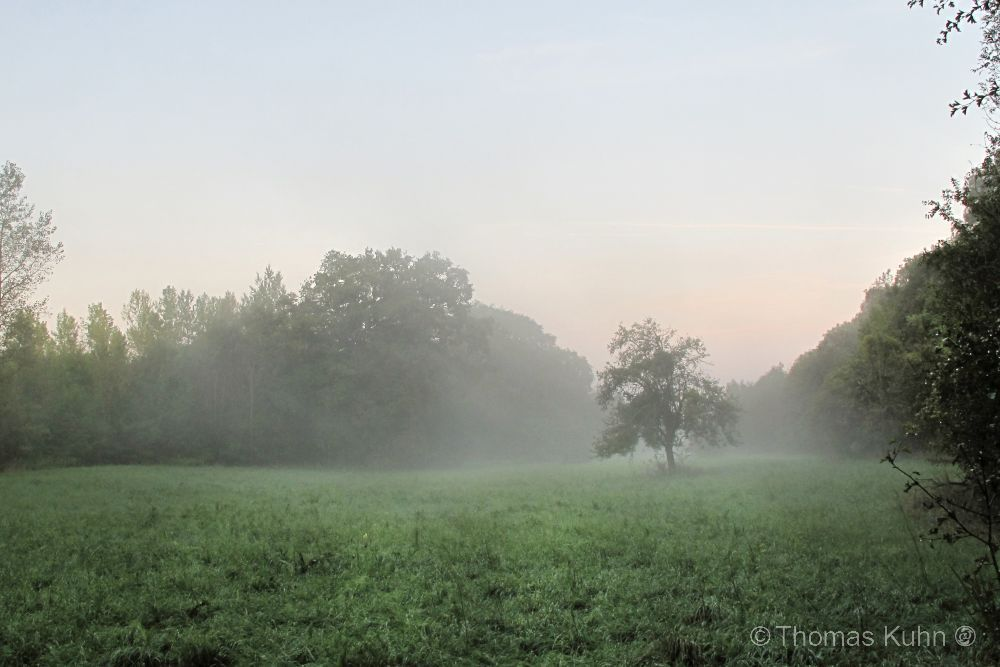 Landscapekühkopf_IMG_4382