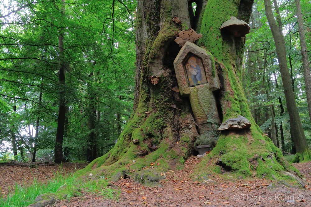 Trees&ForestsBullauer_Bild_2_3_DSCN4686