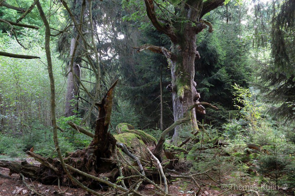 Trees&ForestsCADUCEUS_24_08_2014_Ausflug_Andrea_Göhrde_Naturlehrpfad_TOM_DSCN1770