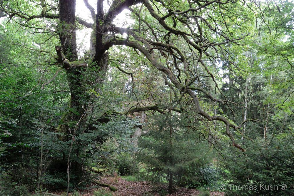 Trees&ForestsCADUCEUS_24_08_2014_Ausflug_Andrea_Göhrde_Naturlehrpfad_TOM_DSCN1773