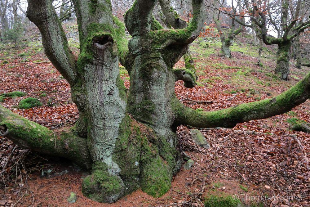 Trees&ForestsEdersee_Hagenstein_TOM_DSCN4890