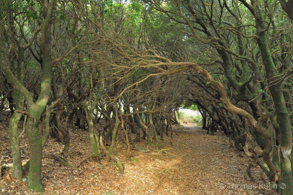Trees&ForestsIkaria_1_DSCN2051