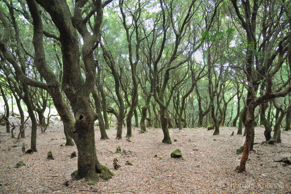 Trees&ForestsIkaria_DSCN2031