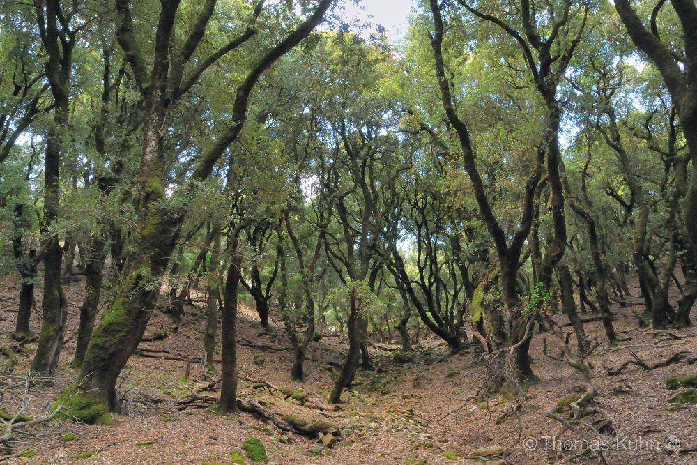 Trees&ForestsIkaria_DSCN2500