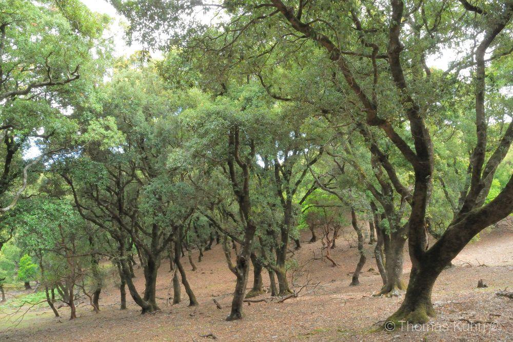 Trees&ForestsIkaria_DSCN2555