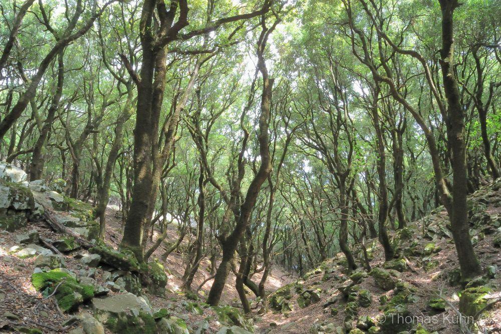Trees&ForestsIkaria_DSCN2573