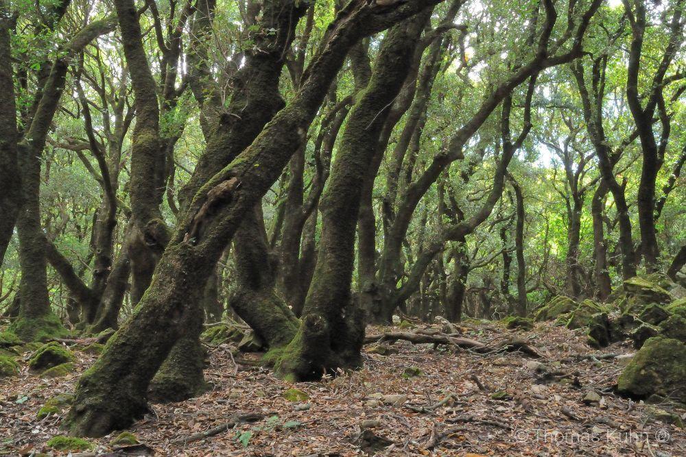 Trees&ForestsIkaria_DSCN2577
