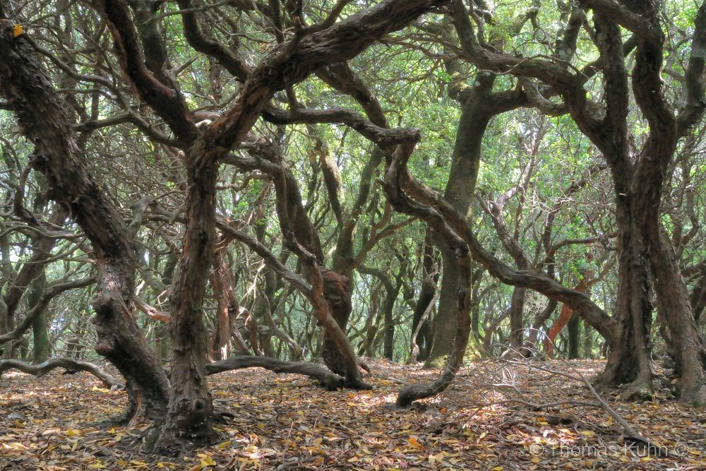 Trees&ForestsIkaria_DSCN2590