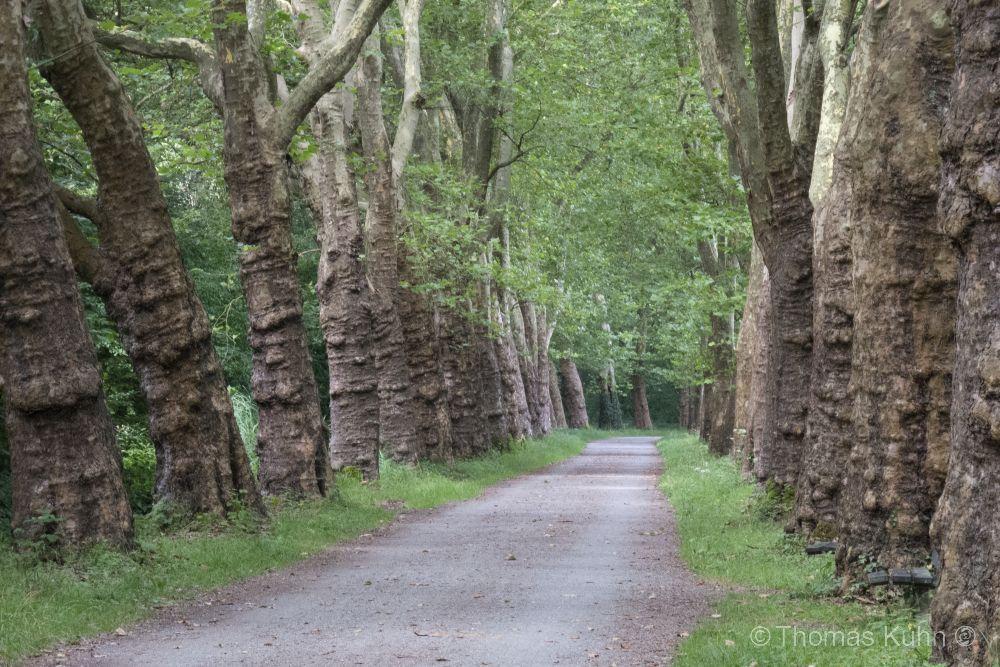 Trees&ForestsMainau_26_08_2013_TOMDSCN6104