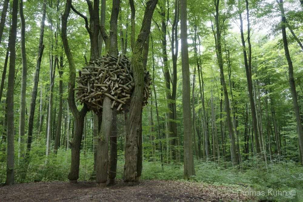 Trees&ForestsNaturfr_Ob_Ramst_20_05_2018TOM_DSC0416_DxO