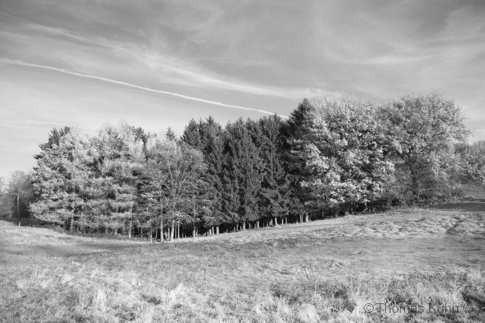 Trees&ForestsNeutscher_Höhe_11_2011TOMDSCN0188