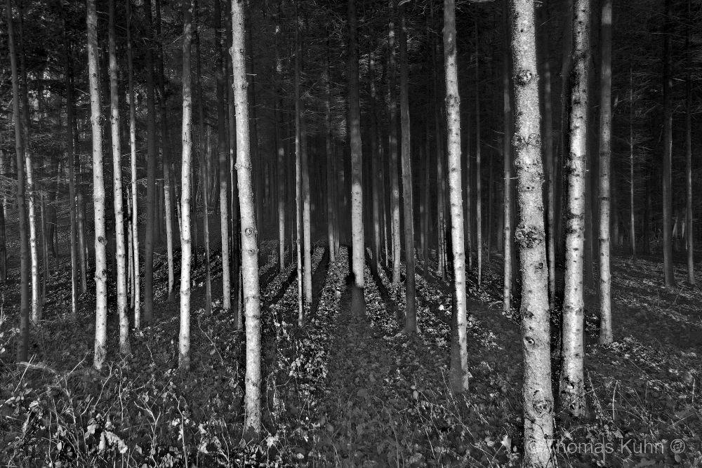 Trees&ForestsNeutscher_Höhe_sw_11_2011TOMDSCN0178