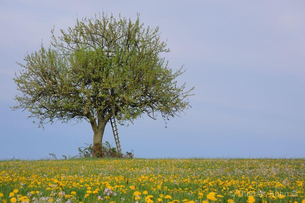Trees&ForestsRehbach_DSCN1544