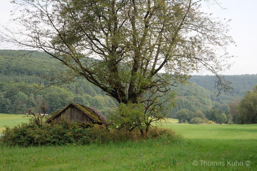 Trees&ForestsRhön_24_08_2017_DSCN8348