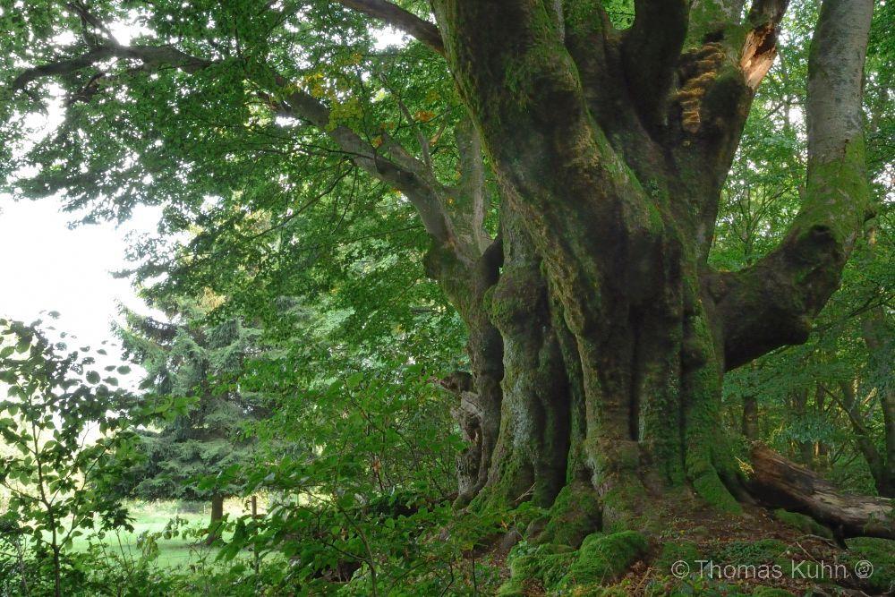 Trees&ForestsRhön_24_08_2017_DSCN8375
