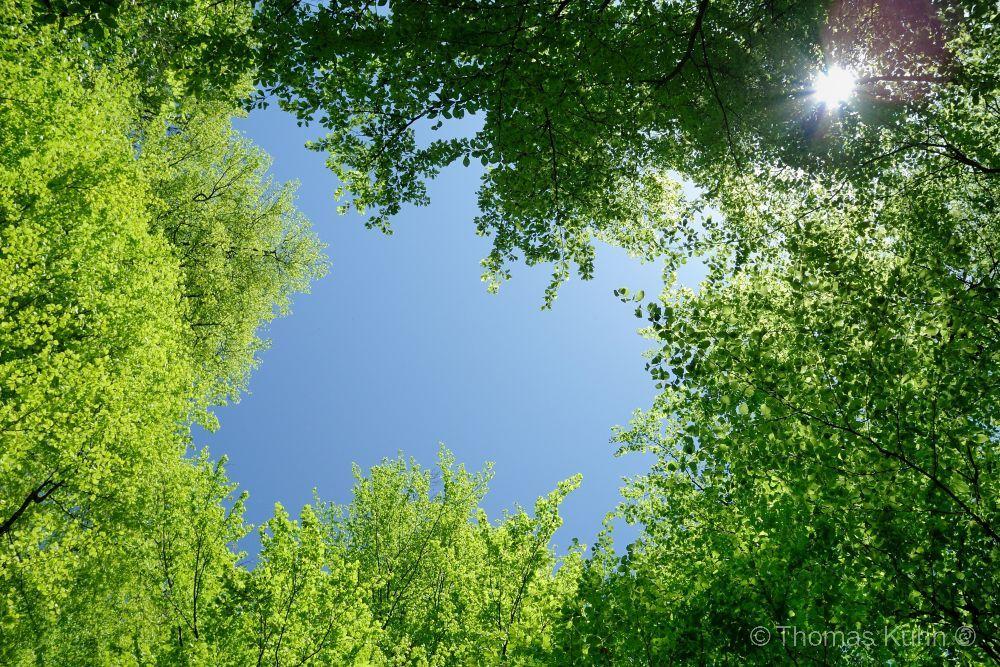 Trees&ForestsRodenstein_1_TOMDSCN1614