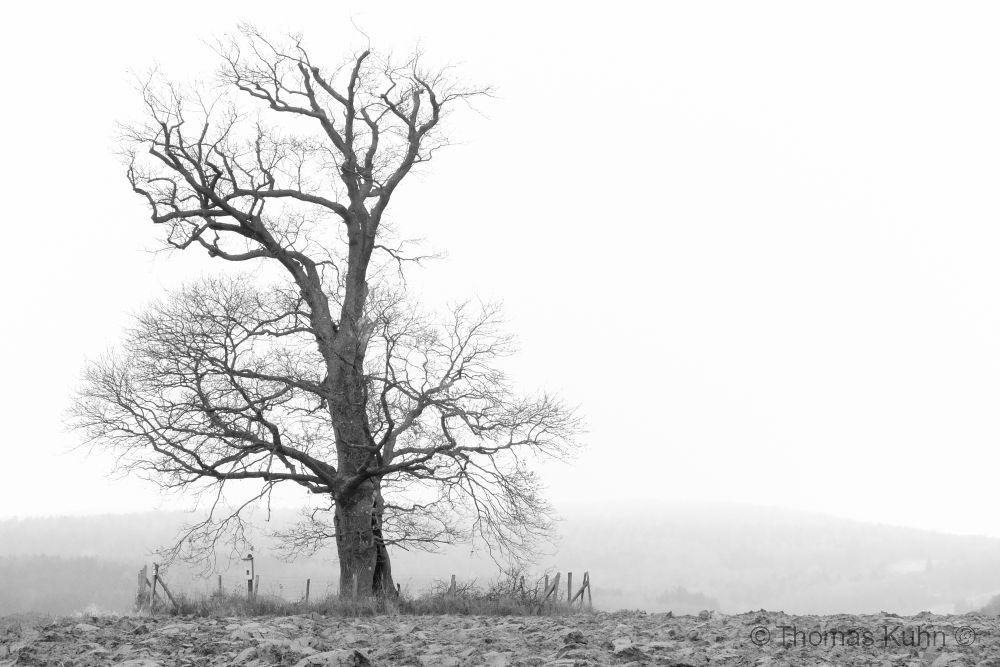 Trees&ForestsRussen_Eiche_Rehbach_2_3