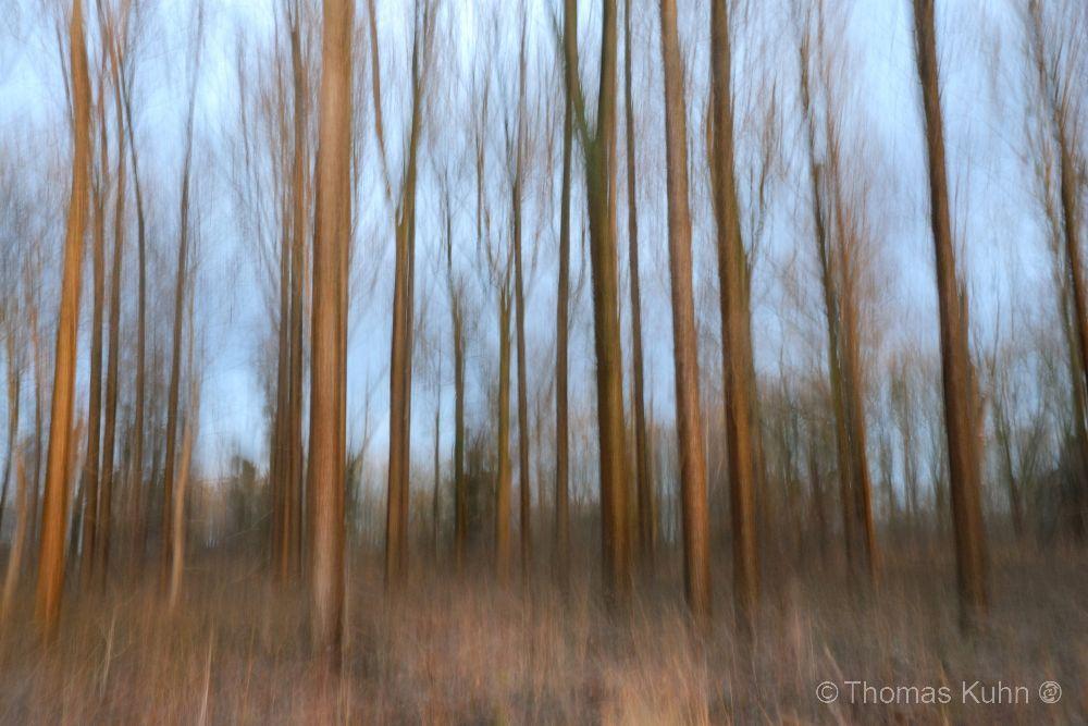 Trees&ForestsSchusterswört_DSCN5387