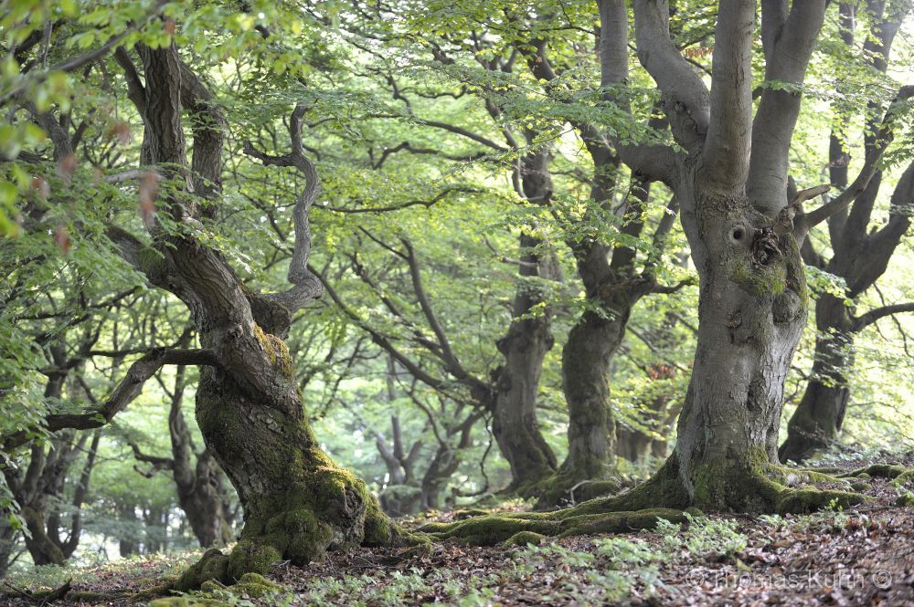 Trees&Forests_TOM8764