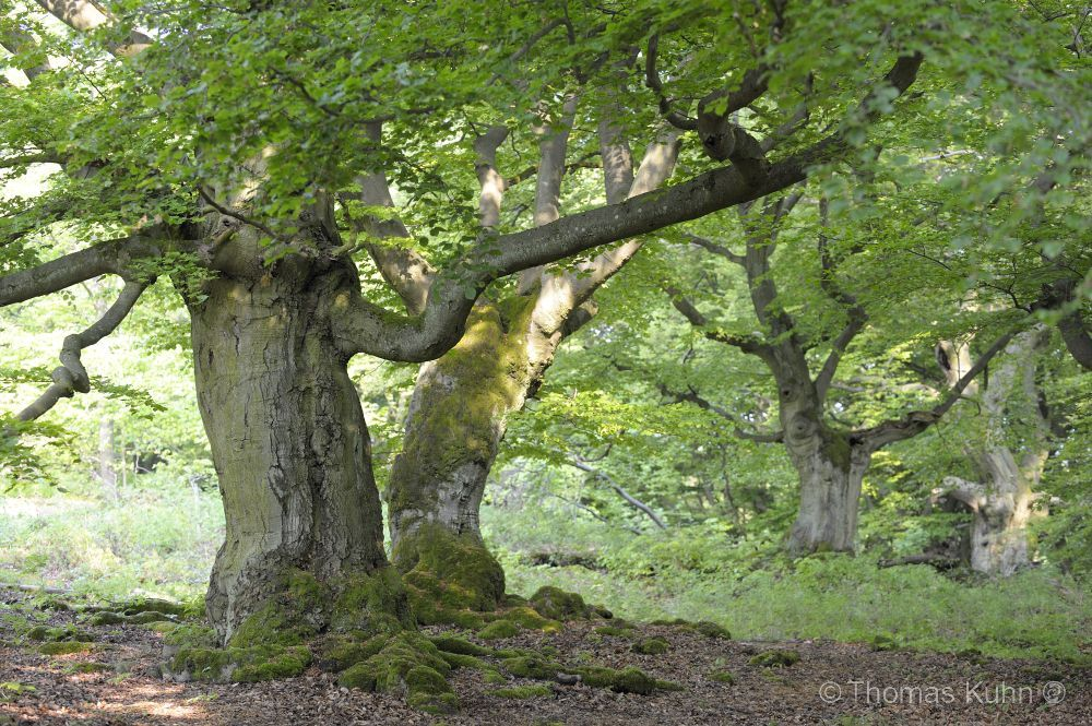 Trees&Forests_TOM8781