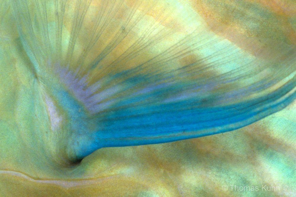 PNG_2007_TOM3_2_ausschnitt_17_nx2